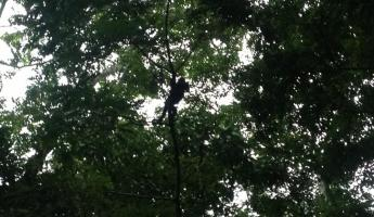 Howler monkeys at Xunanutnich