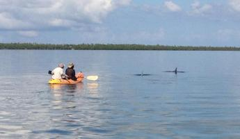 Kayaking with dolphins at Turneffe Flats