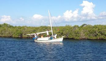 Cruising through the mangroves