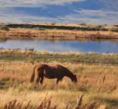 Day 1: Bird and wildlife sanctuary in El Calafate