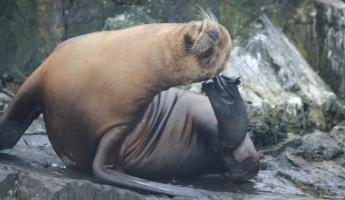 Day 11: Sea lions have itches too