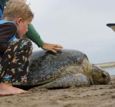 My son with the turtle