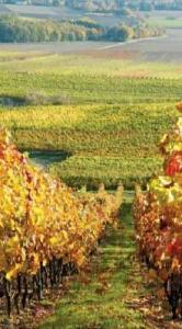 Wander through the European countryside, visting vineyards and tasting wine, during your cultural cruise