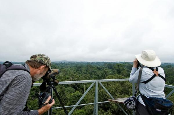 Viewing wildlife from the tower