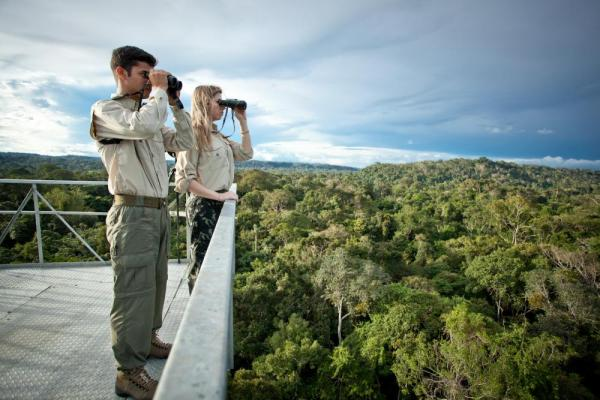Searching for wildlife in the rainforest canopy