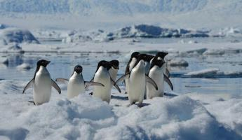 group of penguins at fish island