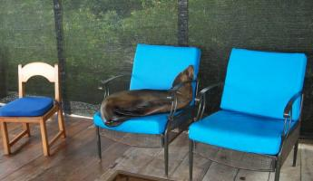 A seal naps on the deck of Adventura Lodge