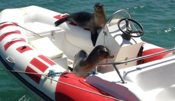 Hitchhikers on Santa Cruz Island, Galapagos