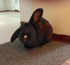 Brownie the Bunny at the Hostal Rabida