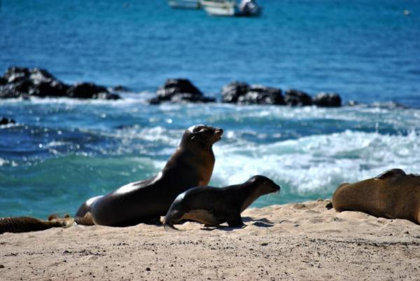 mom and baby sea lion