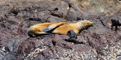Sea lion soaking in some Galapagos sun