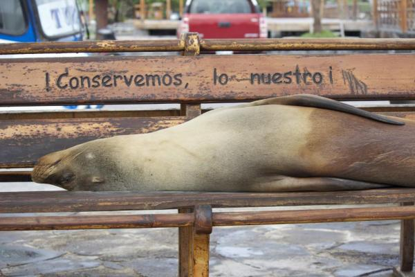 SEA LION RESTING ON A BENCH, PUERTO BAQUERIZO MORENO