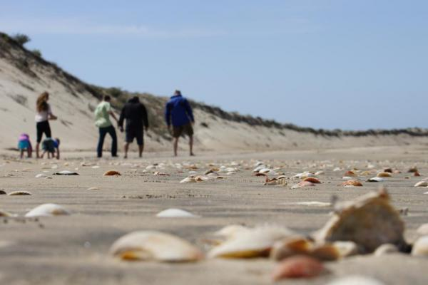 Beachcombing in Baja