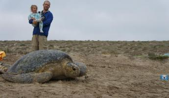 A father and daughter watch a sea turtle return to the water in Magdalena Bay, Baja
