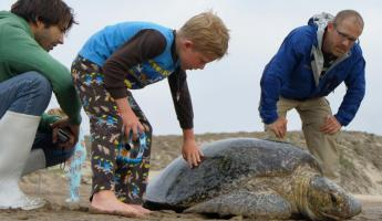 Helping with turtle conservation