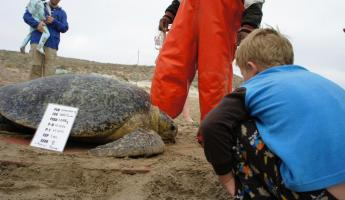 Sea turtle research is a family effort in Baja