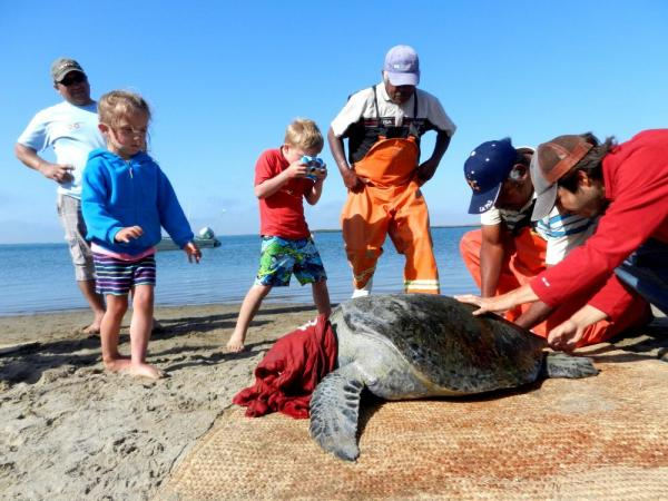 A family participates in sea turtle research in Baja