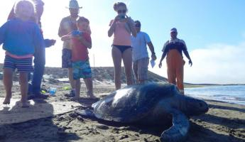 A family volunteers to help with sea turtle research in Baja