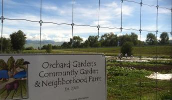 Beautiful Orchard Gardens