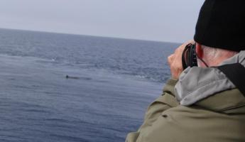 Traveler whale watching from Sea Adventurer