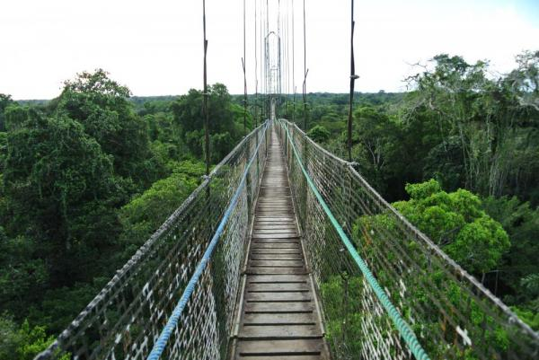 The suspension bridge above Sacha Lodge
