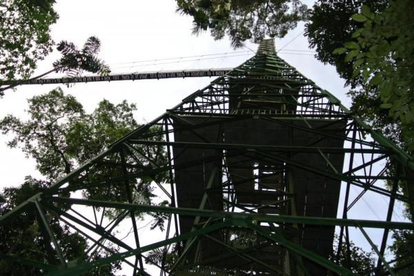 Sacha Lodge's observation tower
