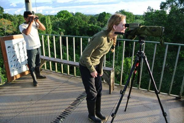 Search for wildlife from the top of Sacha Lodge's observation tower