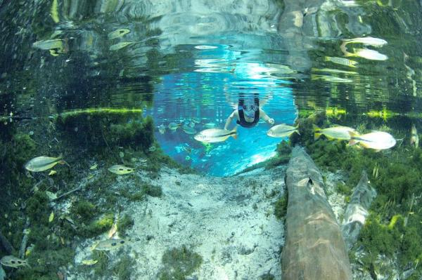 Snorkle in the clear waters of Rio de Prata