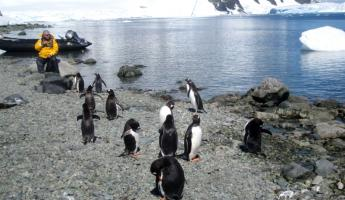 Curious penguins approach during an Antarctic shore excursion