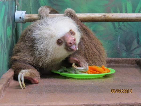Sloth in rehab
