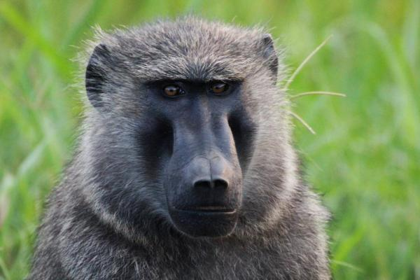 See an abundance of wildlife including baboons.