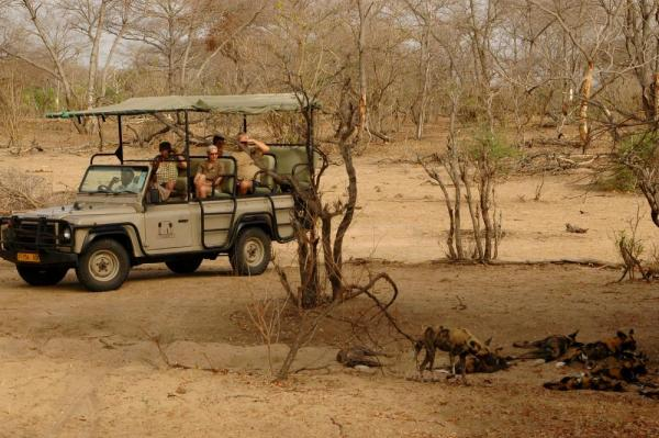Game Drive in the Ngorongoro Crater