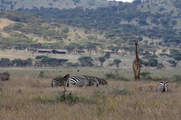 Enjoy an abundance of wildlife while staying at the Lemala Elewanja Camp