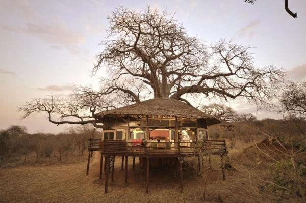A view of the tree house style lodge at Tarangire Treetops Lodge