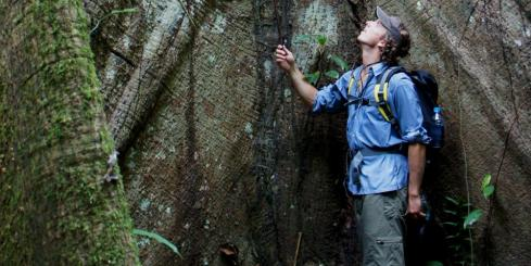 Admiring the size of the tree in the Amazon