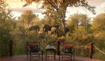 Elephants wander outside of the Hoyo-Hoyo Safari Lodge
