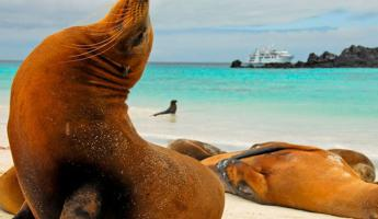 Wander beaches full of sea lions during an island expedition on your Galapagos tour