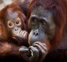 Take part in the feeding stations as you cruise from Borneo to Bali