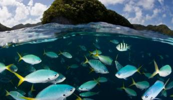 View an underwater world as you sail from the Spice Islands