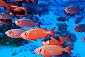 View the underwater world of Rangiroa