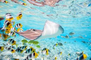 View the exceptional underwater wildlife of Bora Bora