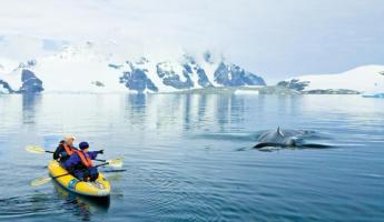 Watch humpback whales on your Antarctic cruise