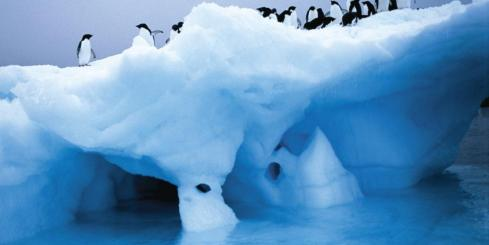 View penguins on the ice on your Antarctica tour