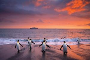 Penguins at an Antarctic sunset