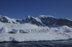 Penguins and seals seen on the Antarctic shoreline