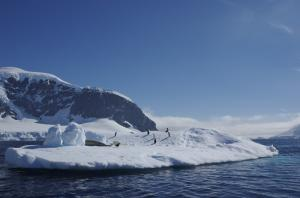 Penguins on the coast of the Antarctic Peninsula