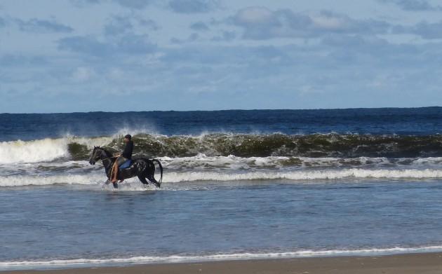 Endurance training for horses on the beach in La Pedrera, Uruguay
