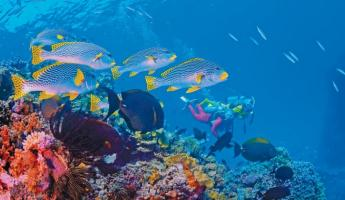 Snorkel with the exceptional sealife of the South Pacific