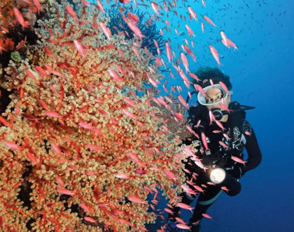 Admire the coral reef as you sail the South Pacific