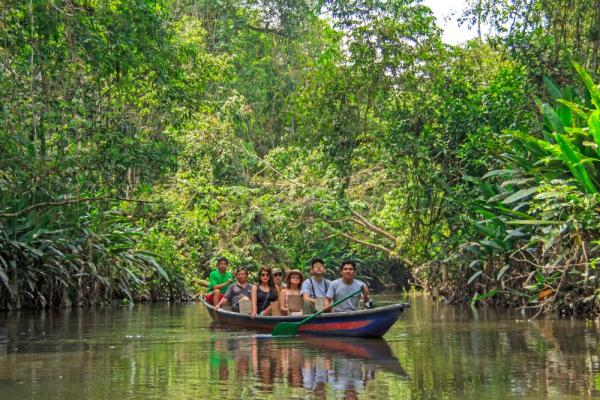 Admire the beauty of the Amazon